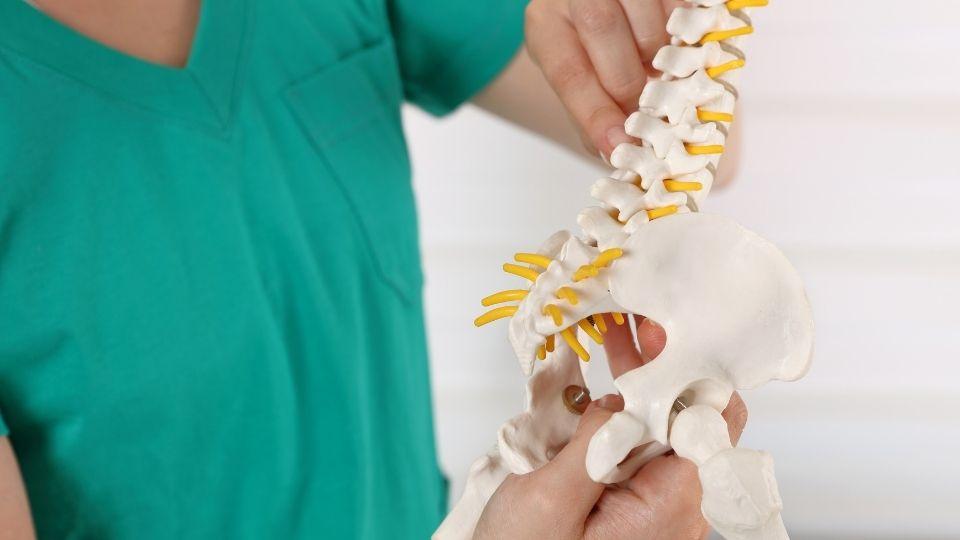 model of tailbone pain