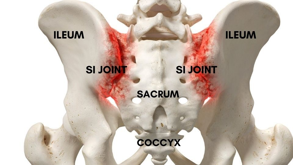 anatomy of sacroiliac joints